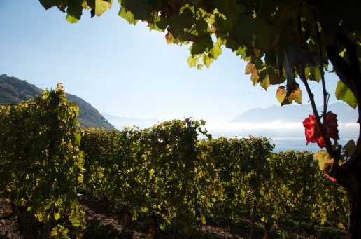 View of Lake Geneva from the Unesco World Heritage Lavaux vineyards. / Photo: Nancy Truman